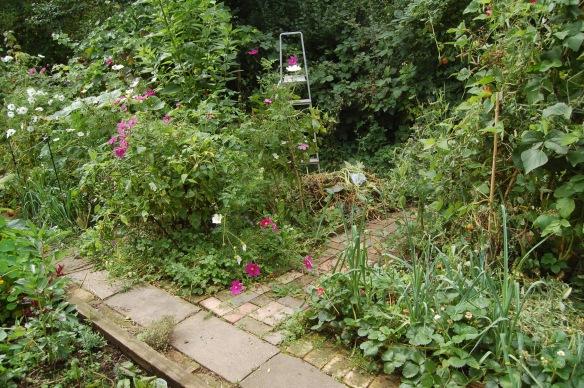 garden sept3