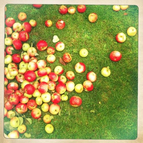 spilt apples