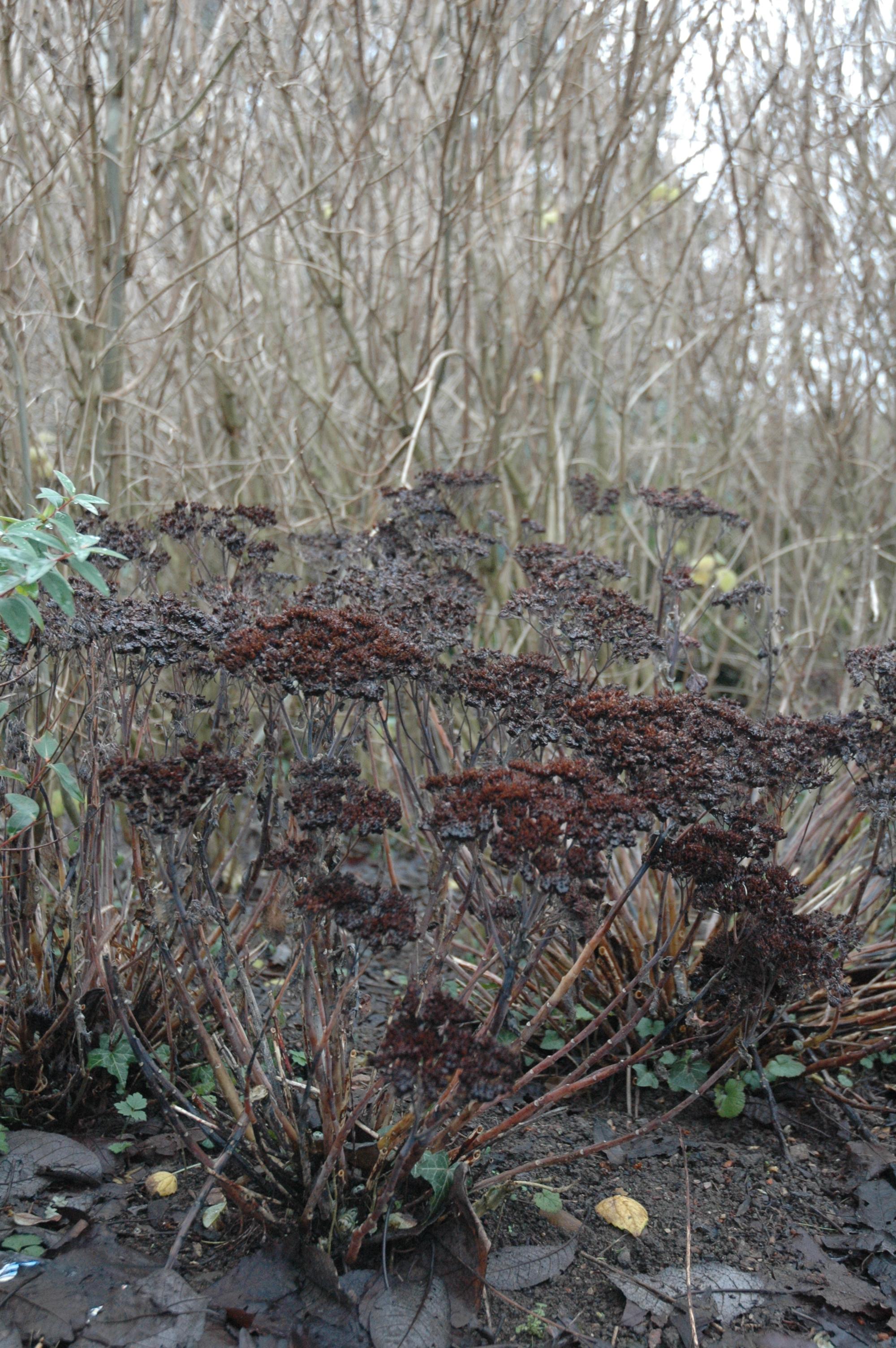 winter interest in the garden nurturegreen