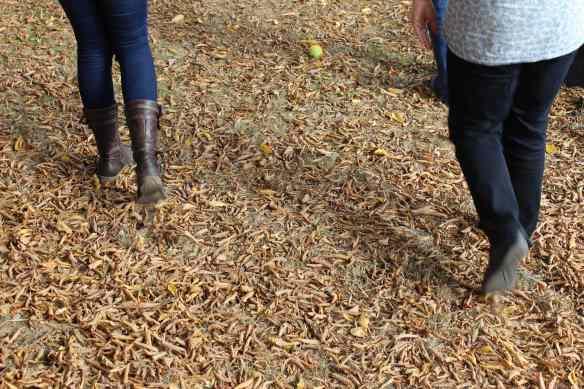 autumn walking legs