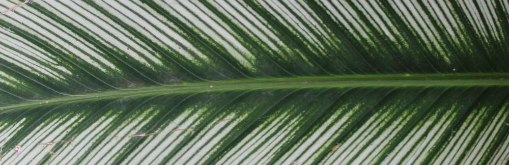 nurturegreen