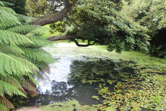 heligan pond
