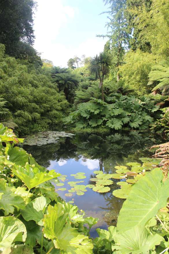 heligan pond2