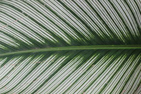 pattern of leaf