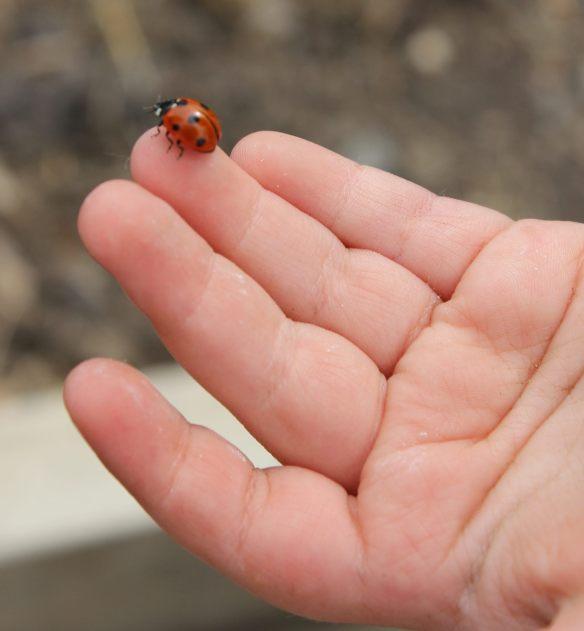 holding ladybug