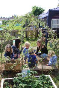 growing-willow-den